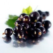 big_Black_Currant_Powder